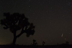 Leonid Meteor Shower over Joshua Tree National Park