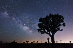Milky Way Galactic Core in Joshua Tree