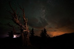 An Electrical Storm near the Ancient Bristlecone Pine Forest