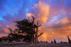 Sunset and Rainbow at Bristlecone Pine Forest