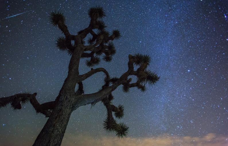 Meteor over Joshua Tree
